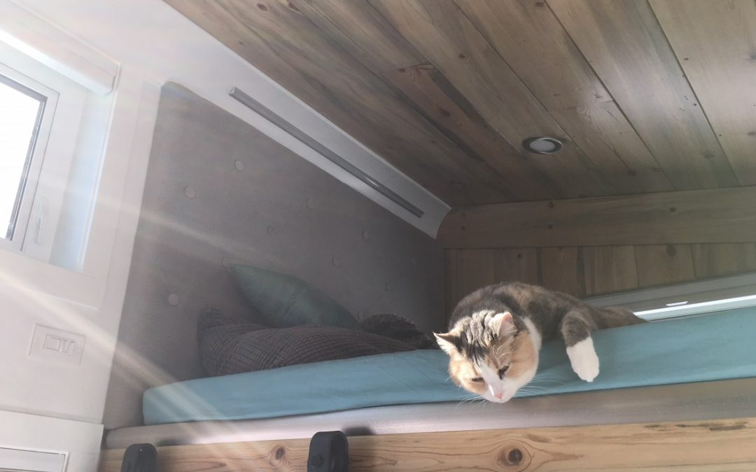 Pets in Tiny Homes