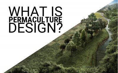 What is Permaculture Design Anyways?